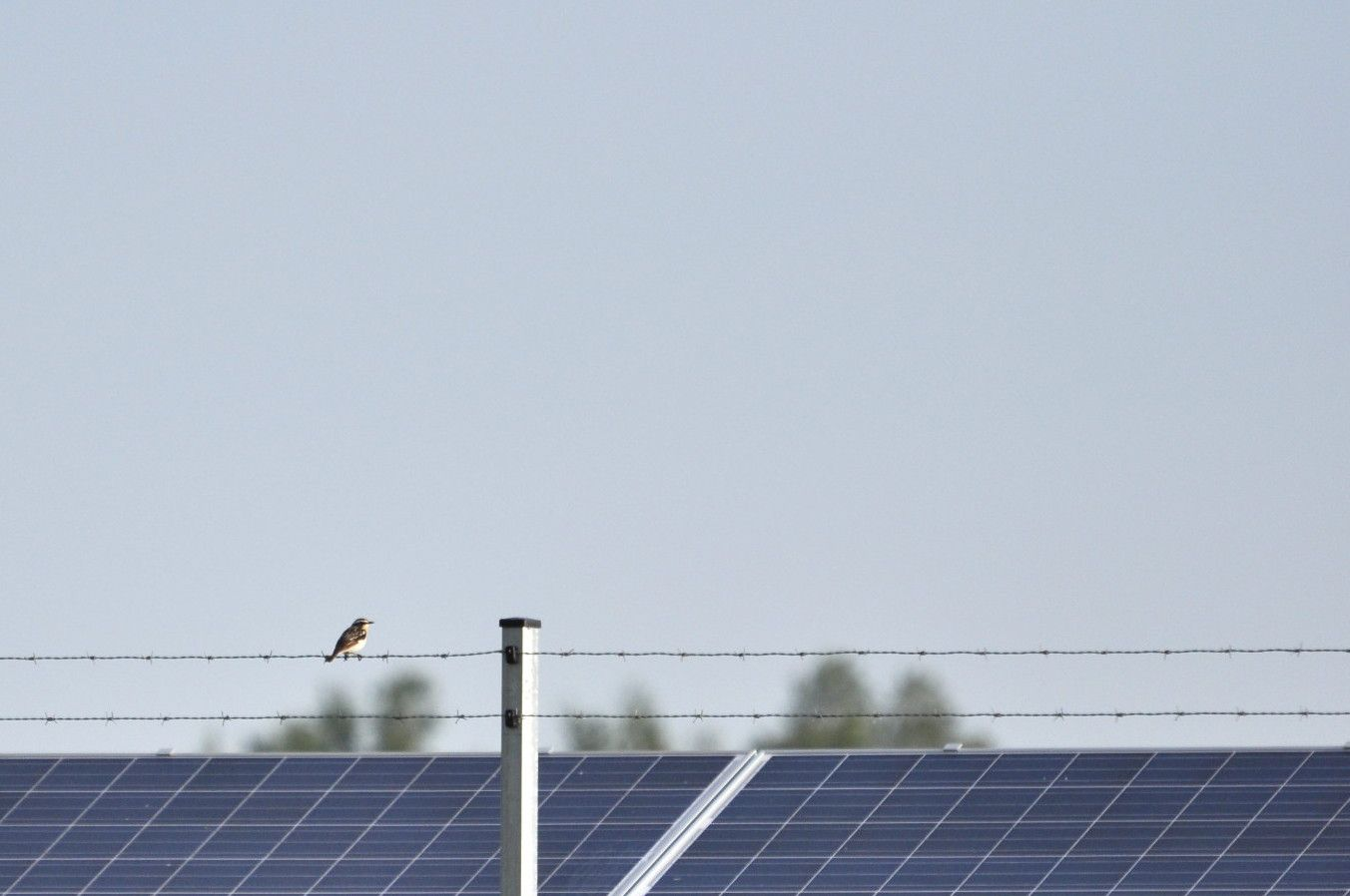 FAUNISTISCHES MONITORING IN SOLARPARKS
